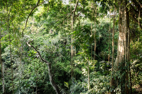 Bali tropical jungle