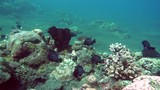 underwater landscape of the tropical sea, fish and corals of different color - 241128412