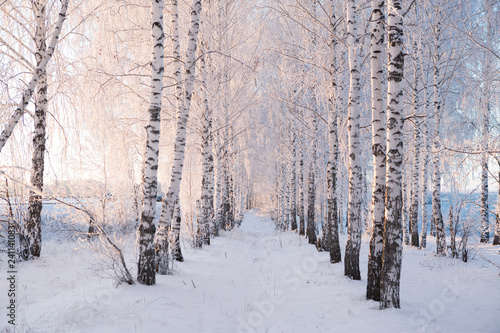 Snow covered trees against a blue sky. Winter landscape - 241141083