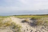 the dunes, Renesse, Zeeland, the Netherlands - 241150236