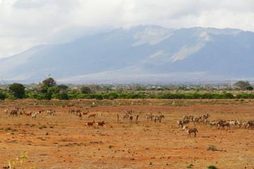 Wildtiere in der Serengeti