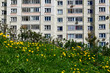 Grass and dandelions in front of a multi-storey building. Russia