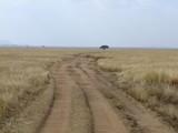Weg in der Savanne - 241155472
