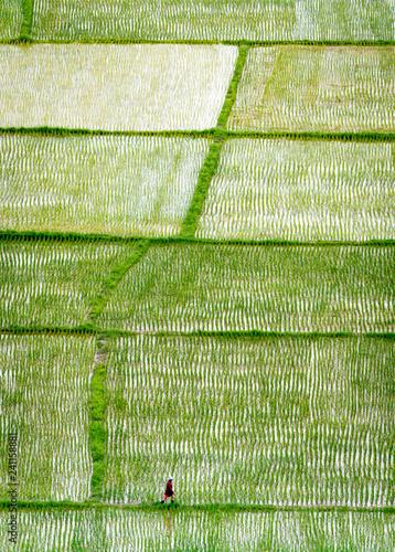 Sinuous fields