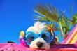 Leinwanddruck Bild - funny dog with sunglasses