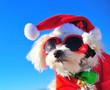 Leinwanddruck Bild - happy christmas dog