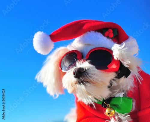 Leinwanddruck Bild happy christmas dog