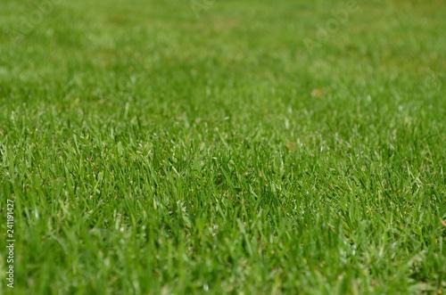 Beautiful Green Grass - 241191427