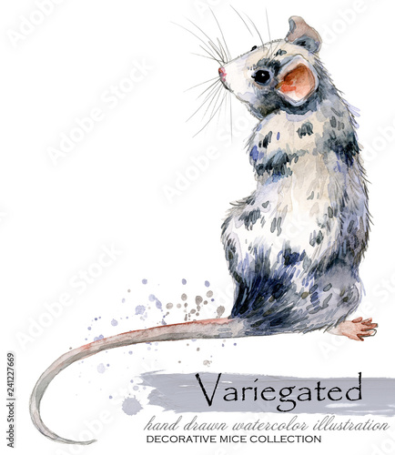 decorative mice watercolor illustration. home mouse  - 241227669