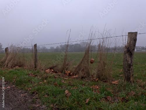 Zaun mit Holzpfählen und Stacheldraht begrenzen eine Kuhweide