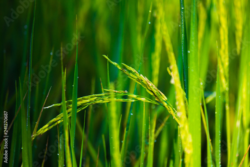 grass, field, green, nature