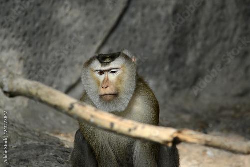 Poster Affen