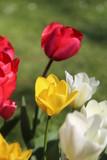 fotos de plantas y flores varias naturaleza