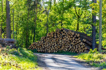 Holzstapel © Christian Schwier