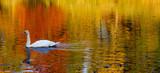 Herbst Wasserspiegelung - 241278413