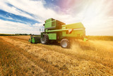 Harvesting wheat harvester on a sunny summer day - 241283090