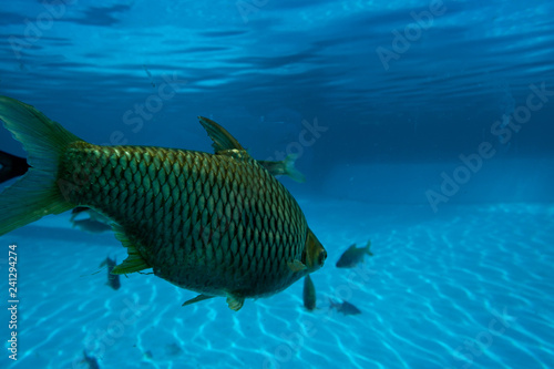 obraz PCV fish