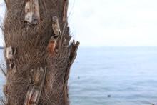 """Постер, картина, фотообои """"Włoska palma nad jeziorem Garda"""""""