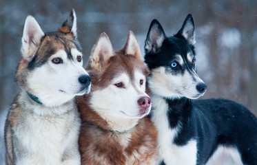Three beautiful dogs