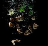 seashells, seashells and children's toys under water on black background - 241314422