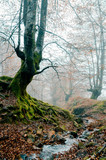 Fantasy forest with fog in the morning. Belaustegi, Basque Country - 241320647