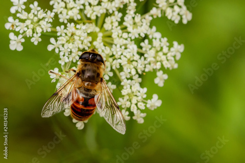 Fliegen Flys