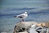 Seagull sitting on a rock enjoying the sun