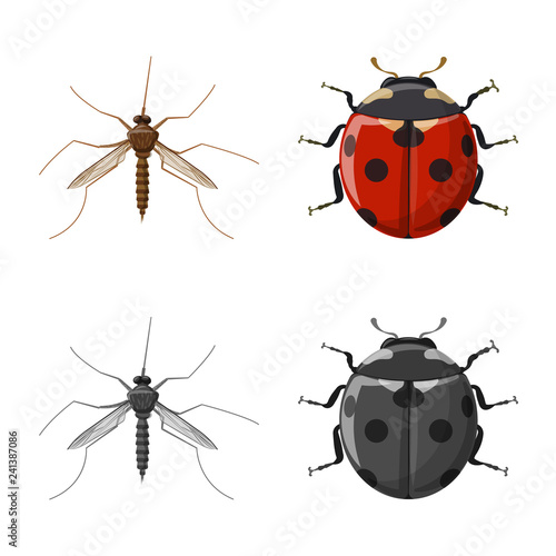 Vector design of insect and fly sign. Collection of insect and element stock vector illustration. - 241387086
