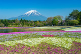 Fuji with the field of pink moss - 241391853