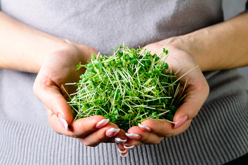 microgreen arugula sprouts in female hands healthy eating concept