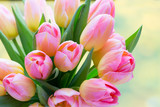 Spring flowers. Living coral tulip bouquet on the bokeh background. - 241402098