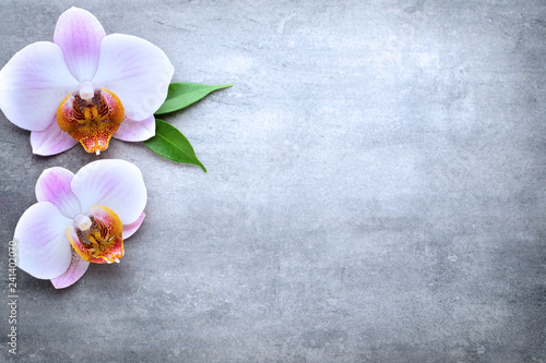 Spa orchid theme objects on grey background.