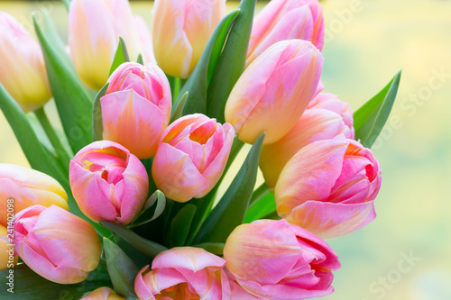Spring flowers. Living coral tulip bouquet on the bokeh background.