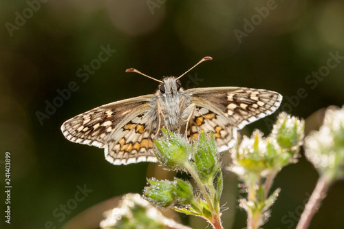 butterfly wing nature - 241403899