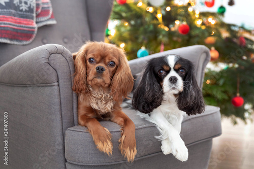 mata magnetyczna Two cute dogs on the armchair