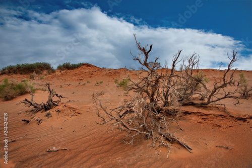 Mongolia. Herman Tsav oasis in the middle of the lifeless Gobi desert