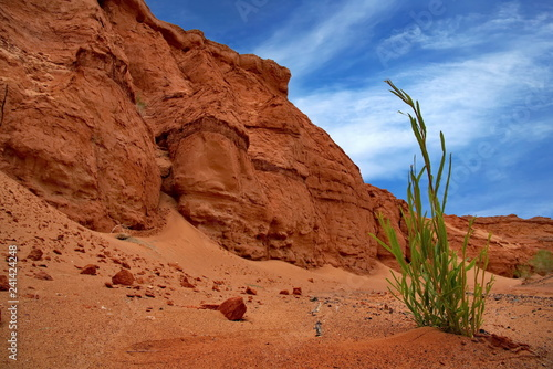 Mongolia. Herman Tsav oasis in the middle of the lifeless Gobi desert - 241424248