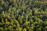 Beautiful panoramic photo over the tops of pine forest. Aerial view. From above. Top view