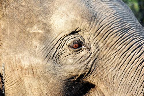 Elephant's eye and wrinkled skin