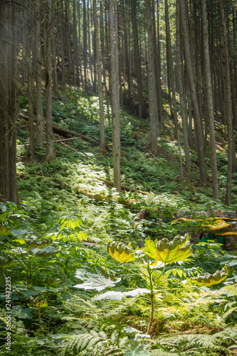 Sunny forest slope