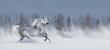 Leinwanddruck Bild - Grey arabian horse galloping across snowy field.