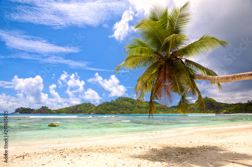 Tropical palm beach with white sand, Seychelles