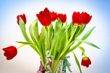 Bouquet of flowers - red tulips
