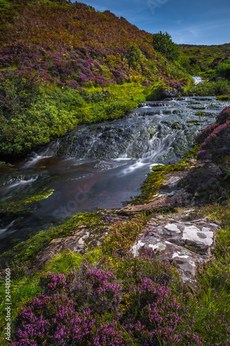 Moutain River With Cascade Waterfall In Scenic Valley With Flowers On The Isle Of Skye In Scotland - 241480060