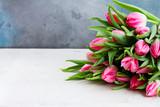 Pink fresh tulips - 241483208
