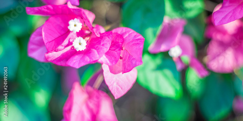 beautiful purple flowers, on blurred green background, closeup - 241492063