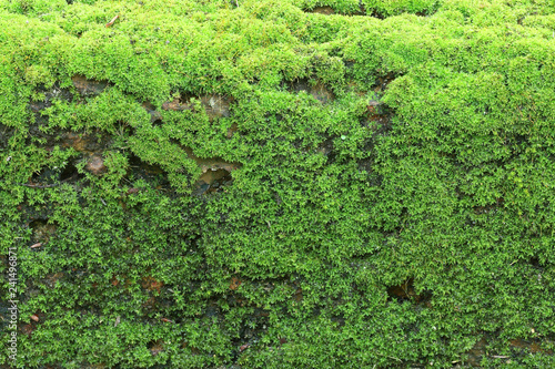 mata magnetyczna Bright green moss background textured on stone walkway