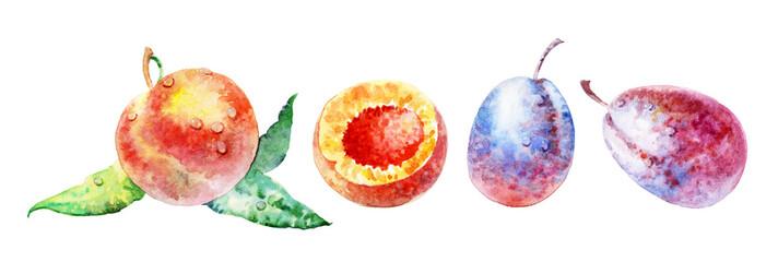 fruit on white background © Алексей Панчин