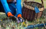 eine Frau ist bei der Gartenarbeit im Frühling - 241585424