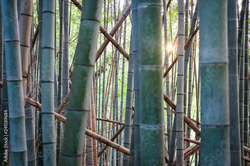 Bambus Wald in Japan